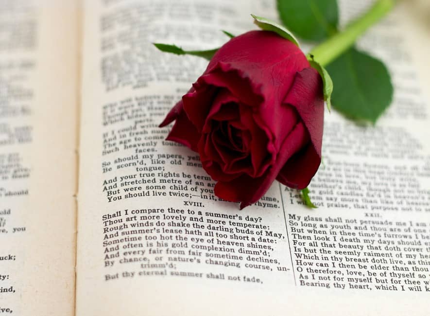 Red rose overlaid on book page of Shakespeare text