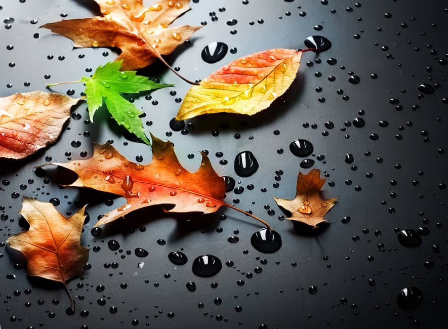 Beautiful autumn / fall leaves on dark background