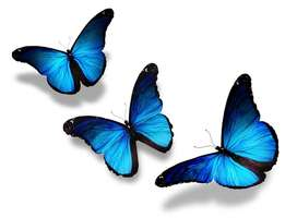 Three beautiful blue butterflies on white background