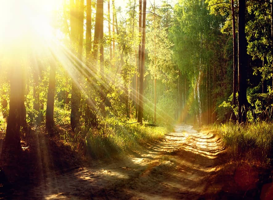 Forest scene with sunlight shining through gap