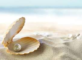 An open shell with a pearl inside sitting on sandy beach