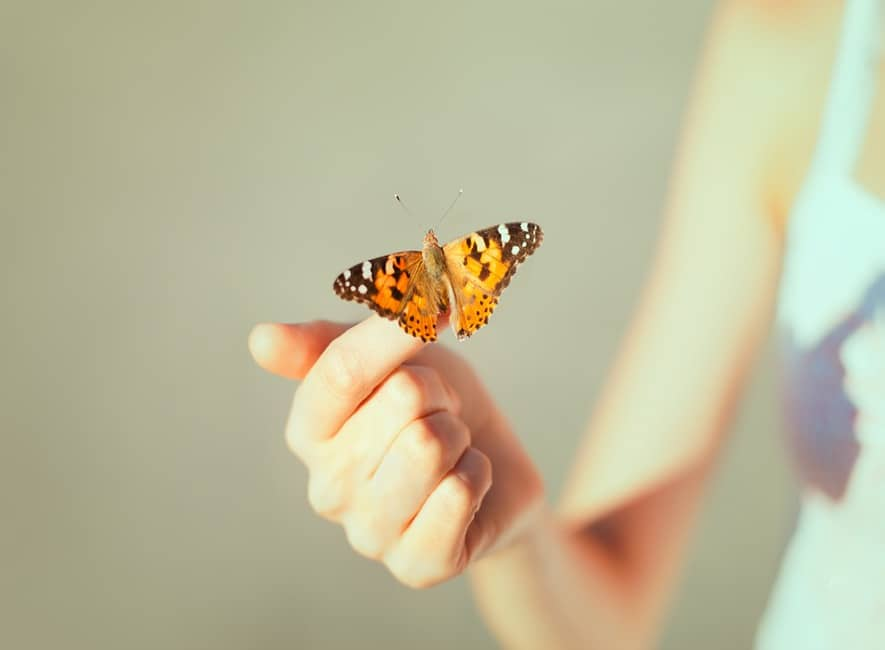 Beautiful golden-coloured butterfly sitting on finger