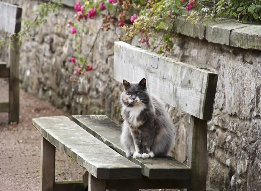 Pet cat, Fluffy, sits on public bench next to the sea